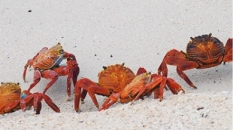 Crabs in the Galapagos | CameraAndCarryOn.com