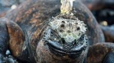 Iguana in the Galapagos | CameraAndCarryOn.comday2_nemogalapagos_cameraandcarryon