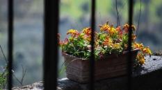 flowers_civitadibagnoregio_cameraandcarryon-jpg