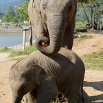 E is for Elephant: Getting Up Close in Chiang Mai