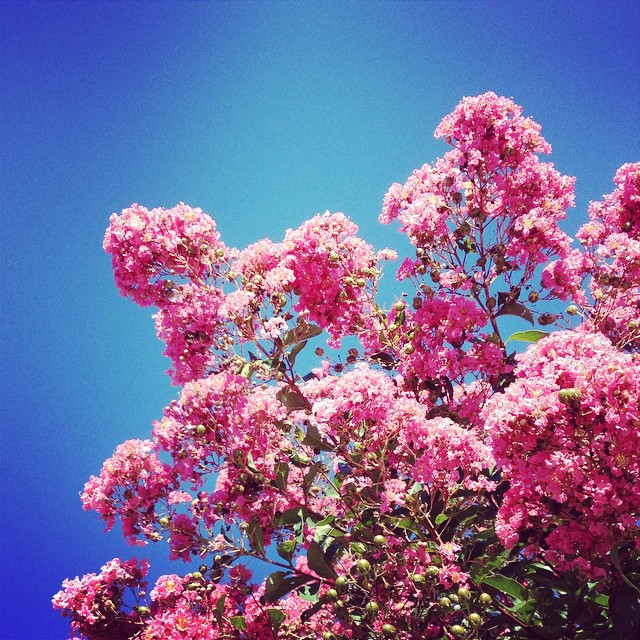 It's a beautiful day in the neighborhood, a beautiful day in the neighborhood... #mrrogers #pinkandblue #cloudless