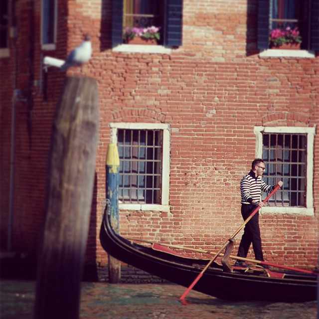 Is it any surprise this is one of our favorite cities on Earth? #venice #gondolier #seagull