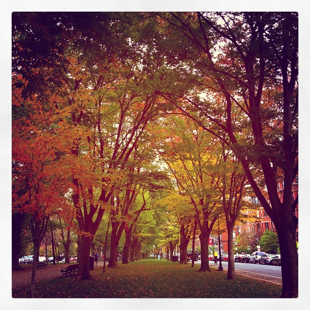 Shannon's favorite season is #Autumn (cool but not cold, cinnamon and spice smells, and vibrant leaves). What's yours? #fallishere #crisp #beautifultrees