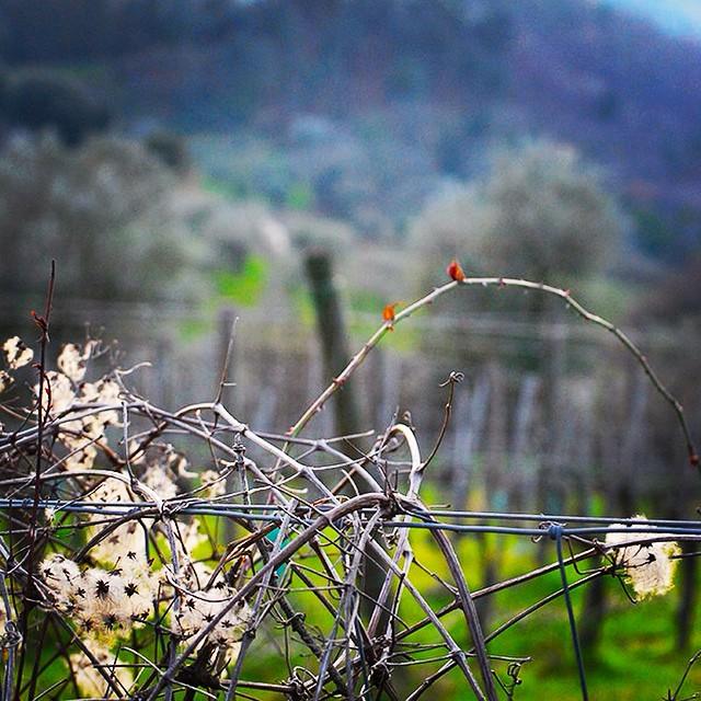 Maybe instead of the big picture, today I'll savor the small stuff. #details #tuscany #focus