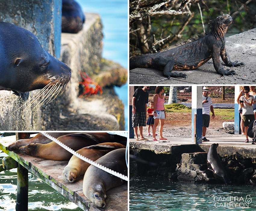 5 Things to Get Excited About in Santa Cruz, Galapagos | CameraAndCarryOn.com