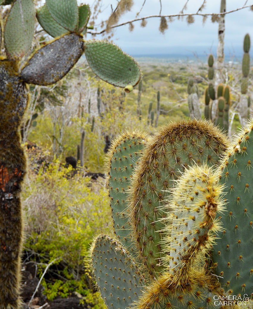 cactus santa cruz -- Galapagos Wildlife and Scenery in Animated GIFs and Stunning Photos | CameraAndCarryOn.com