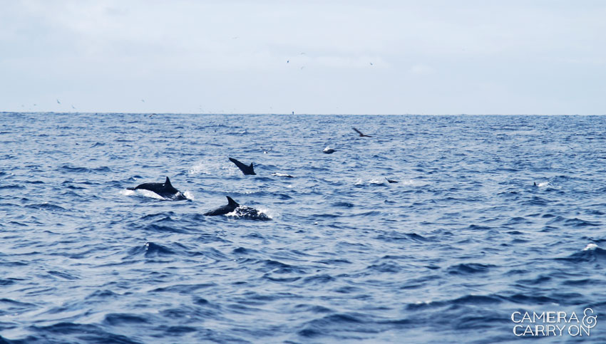 dolphins -- Galapagos Wildlife and Scenery in Animated GIFs and Stunning Photos | CameraAndCarryOn.com