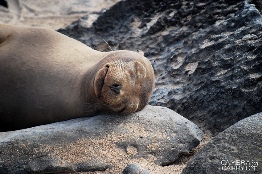 sea lion -- Galapagos Wildlife and Scenery in Animated GIFs and Stunning Photos | CameraAndCarryOn.com