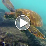 Video: Exploring the Galapagos Islands on Land & Sea